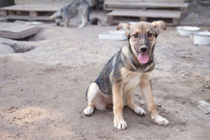 D'après des sources non-officielles, entre cinq et dix habitants de Sotchi sont victimes chaque jour d'attaques d'animaux errants.