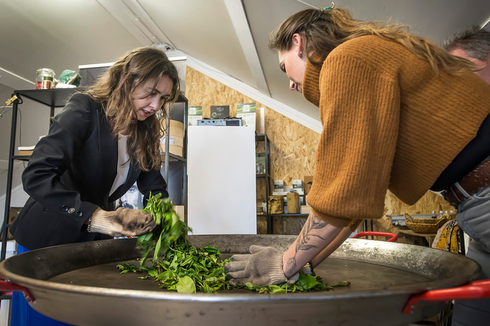 Anne-Marie Spierings (links) was begin vorige maand op bezoek bij een Brabantse theeplantage in Zundert.