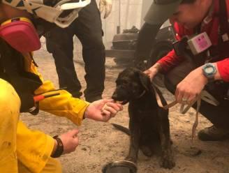 Puppy levend aangetroffen in de asresten van bosbrand in Californië