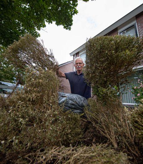 Buxusmot slaat toe in IJsselmuiden: 'In week tijd niks meer over van onze dertig jaar oude buxus'