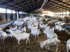 Dorpsraad Vinkel over gezondheid met pluimvee of geiten naast de deur