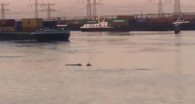 Mysterieuze dieren duiken op in Rotterdamse haven