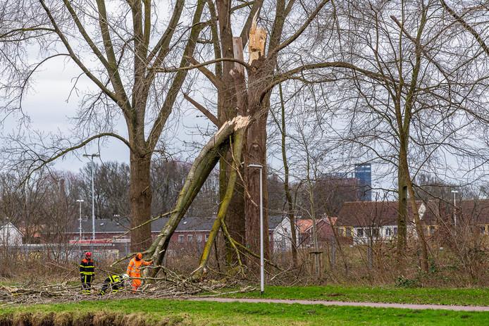De afgebroken tak kwam terecht op het fietspad aan de Goirkekanaaldijk in Tilburg.