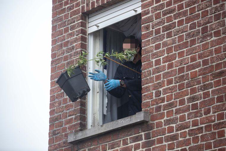 Op 9 april 2019 werden in een pand op de Assensteenweg in Ternat ongeveer 1.250 planten aangetroffen.