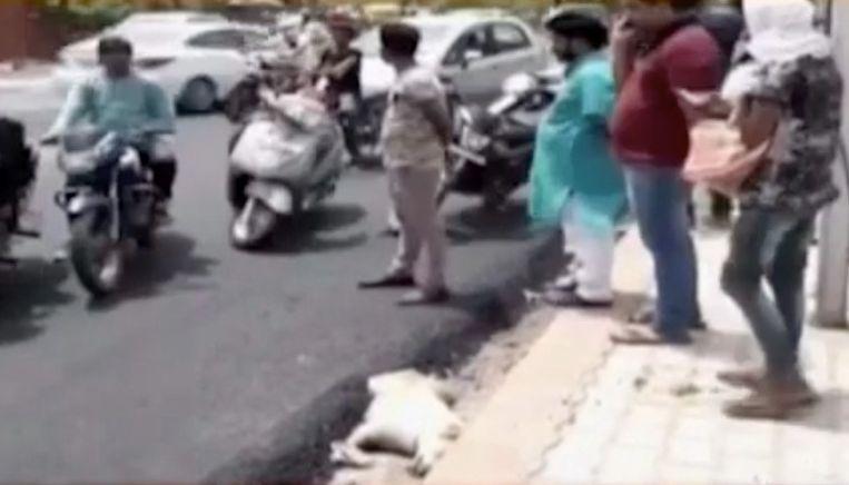 Volgens dierenactivisten lag de hond te slapen toen hij werd overgoten met asfalt.