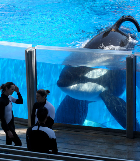 Orkatrainer SeaWorld: Het is een horrorhuis