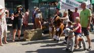 Na zes jaar opnieuw dorpsfeest 'Ontdek Geluwe, Geluwe Ontdekt'