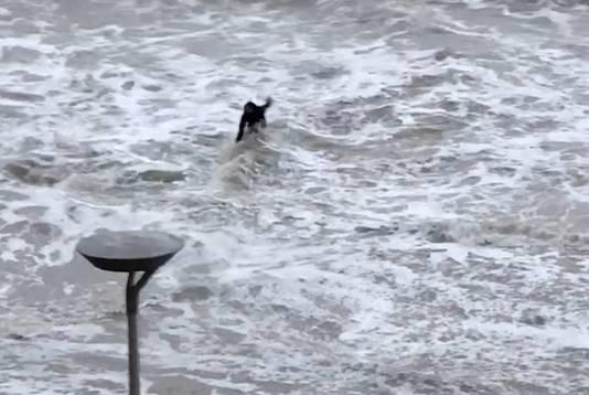 De tiener wordt verrast door de golf. Still uit video