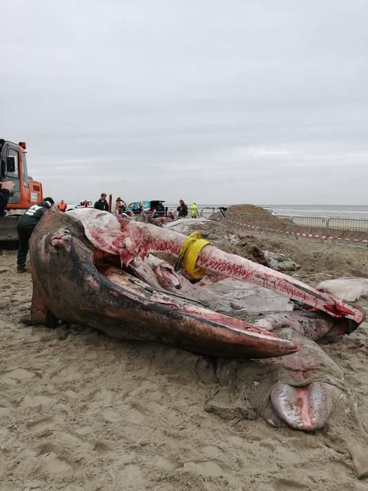 De walvis op het strand van Ter Heijde
