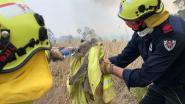 Al 480 miljoen dieren omgekomen bij bosbranden in Nieuw-Zuid-Wales volgens Australisch ecoloog