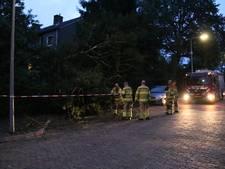 Boom valt op geparkeerde auto in Arnhem