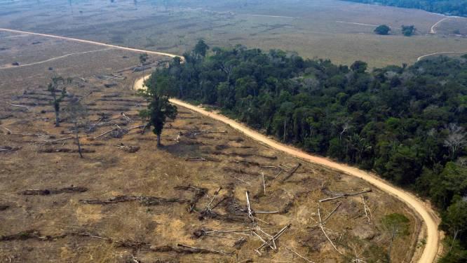 """Bolsonaro klaagt over""""brutale desinformatiecampagne"""" over Amazonewoud, terwijl ontbossing gestaag verder gaat"""