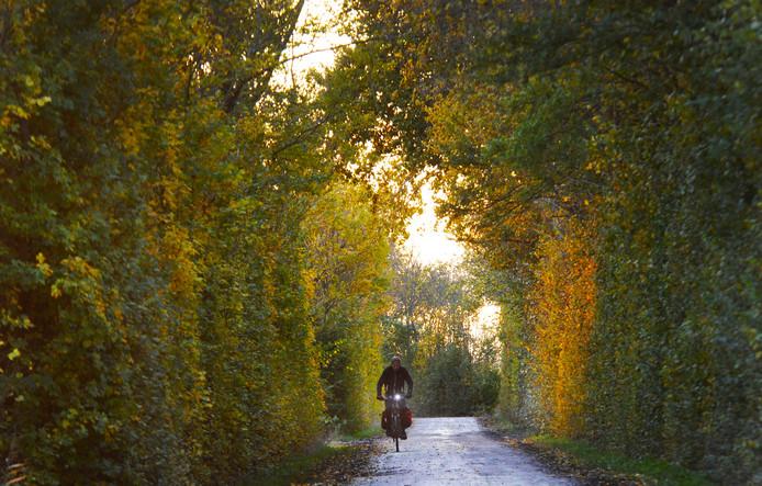 511 bomen worden gekapt aan de Veldersweg/Kluithoekweg in Grijpskerke. Het gaat om een stuk waar veel zaailingen zijn uitgegroeid tot jonge bomen die te dicht op elkaar staan.