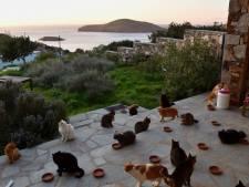 Kattenopvang overspoeld met reacties op droomjob Grieks eiland: 'Tel kwijt'