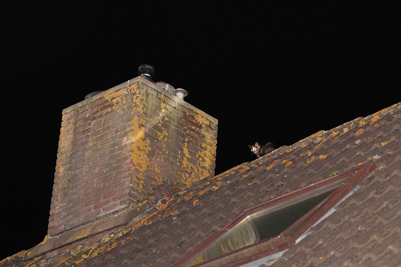 Het poesje op het dak.