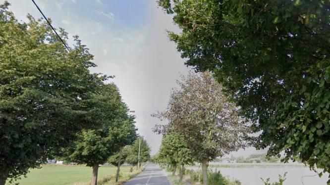 Jeugd van Natuurpunt zet fotowedstrijd op voor bomen van de Veldkantstraat
