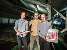 Duurzame vis van Brabantse vispioniers blijkt onverkoopbaar