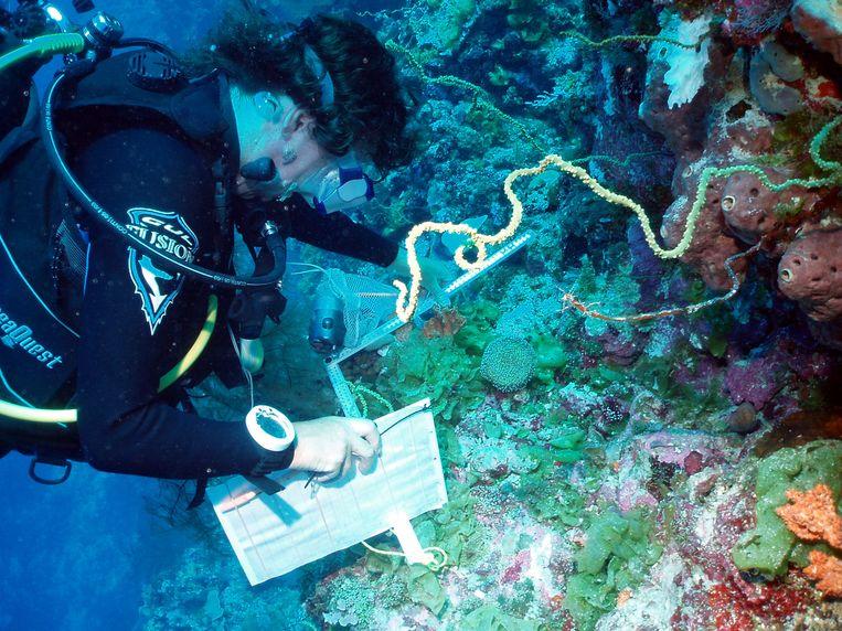 Duikers bestuderen het koraalrif aan de Chagosarchipel.