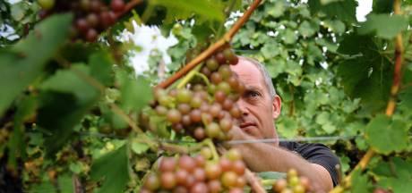 Wijn past prima tussen het bier bij PROEFlokaal in Cuijk