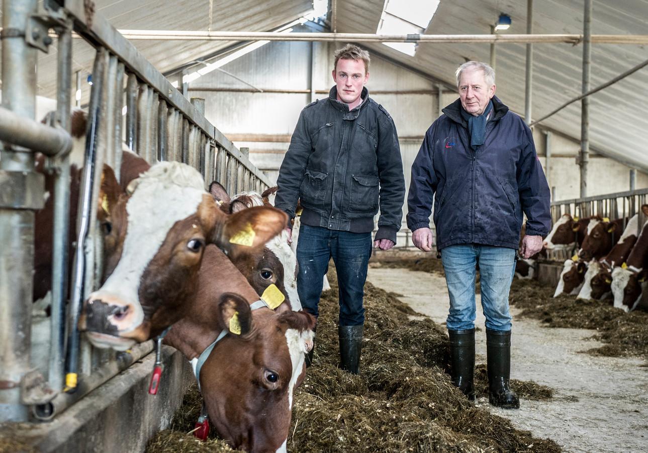 Theo en Wim van Dinther uit Oss strijden voor hun roodbonte MRIJ-koeien, een zeldzaam koeienras. Foto: Koen Verheijden