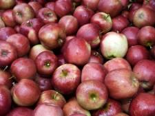 'Balgoijse appeltjes' Vierdaagse afgeschaft