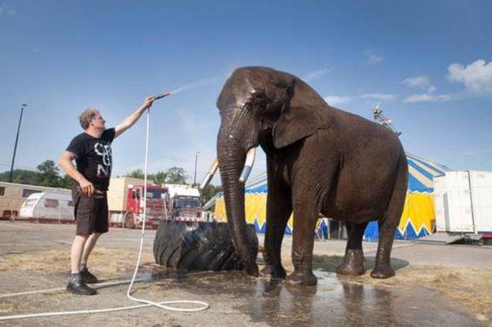 Olifant Buba geniet van een verfrissende douche