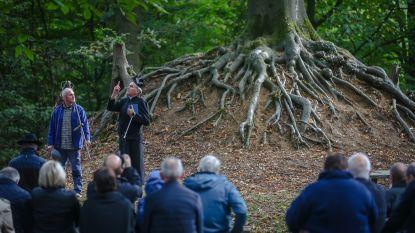 Onze-Lieve-Vrouwebeuk maakt kans op titel 'Vlaamse boom van het jaar'