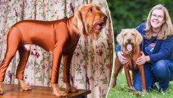 Stan de hond heeft hooikoorts, dus mag hij enkel naar buiten in dit superheldenpakje