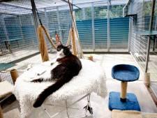 Dierentehuis De Hof van Ede na drie weken kattenziekte weer open