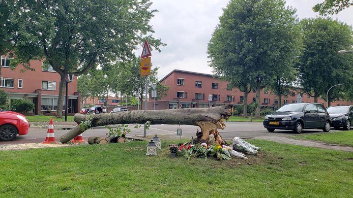 De resten van de omgevallen zilveresdoorn aan de Drapenierlaan in Zwolle doen nog denken aan het drama dat zich hier woensdagavond voltrok. Buurtbewoners hebben bloemen en kaarsen bij de boom gelegd ter nagedachtenis aan de 52-jarige fietsster die door de boom werd geraakt en overleed.