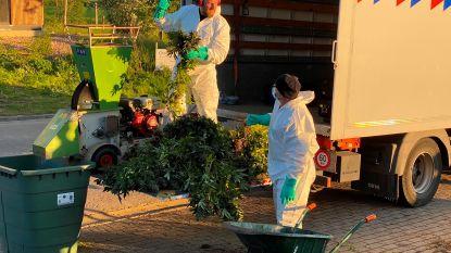 Indrukwekkende cannabisplantage met bijna 1.000 planten ontdekt na brand: Civiele Bescherming urenlang in de weer met verhakselen en ontmantelen