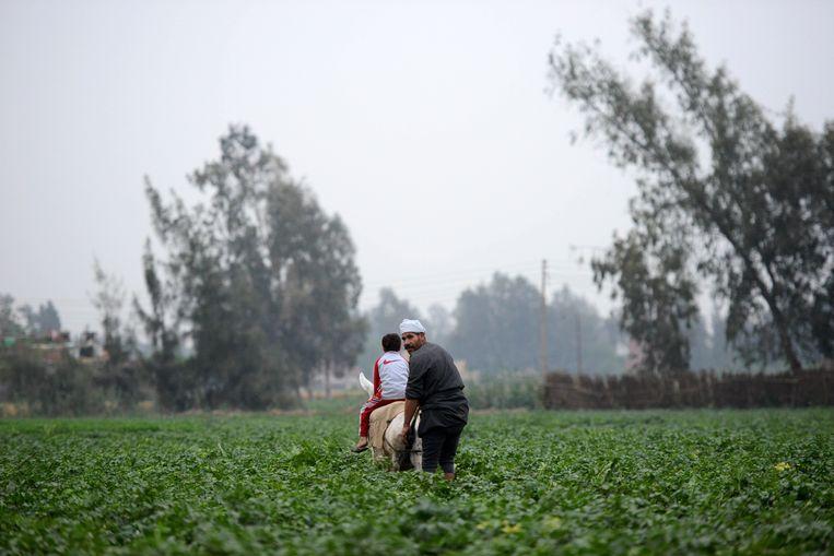 Vader en zoon op het land in de buurt van Shamma in de Nijlvallei. Beeld AFP