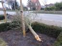 Peter Porreij vond vanochtend een afgebroken boom in zijn voortuin