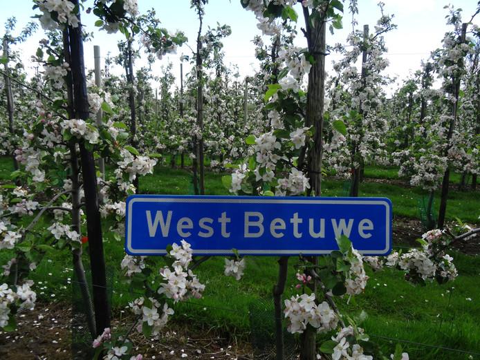 West Betuwe, de nieuwe naam voor de fusiegemeente met Lingewaal, Geldermalsen, Neerijnen