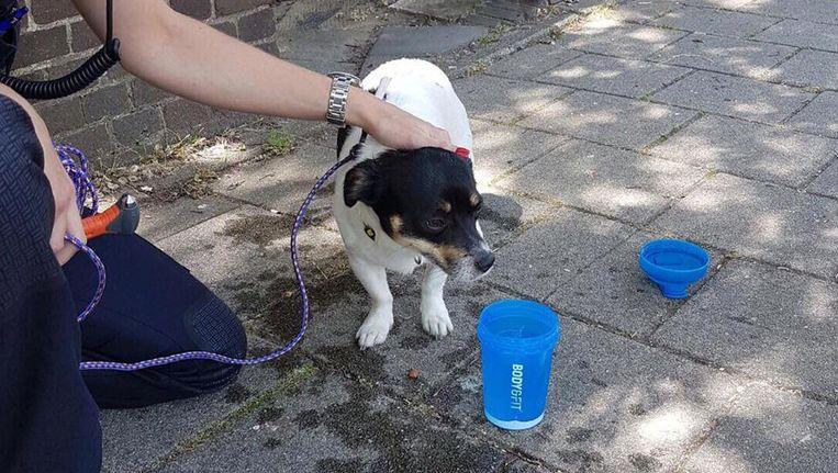 De hond werd flink natgemaakt. Beeld Politie Amsterdam