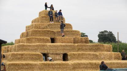 Tiende editie van Het Maïsdoolhof mikt op 10.000 bezoekers