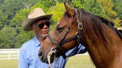 Van acteur tot imker: Morgan Freeman laat zijn domein van 12.400m² ombouwen tot 'bijenheiligdom'