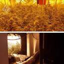 De hennepkwekerij werd midden in een flat ontdekt.