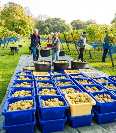 Eerste winst Zeister wijn gaat naar  lokaal sociaal project