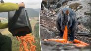 Helikopters droppen duizenden kilo's wortels voor kangoeroes die verhongeren door bosbranden