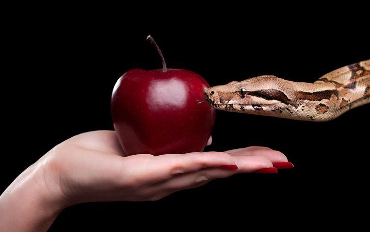 verboden vrucht werd pas in de 18de eeuw courant als metafoor voor