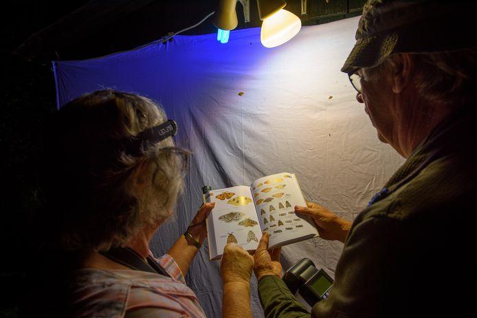 Nachtvlinderen tijdens de Nationale Nachtvlindernacht in de Vlindertuin