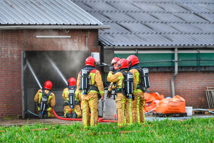 Brand varkensstal in Sterksel. Zo'n duizend dieren zijn aanwezig.