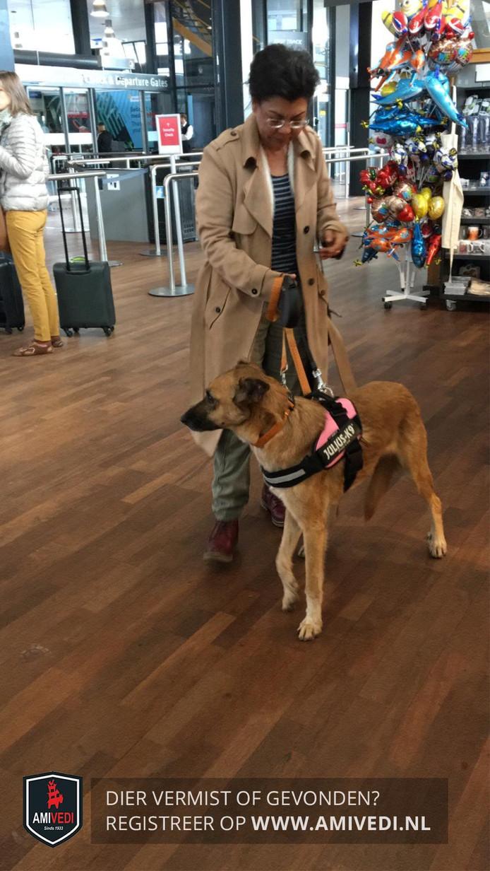 Orville kort na zijn aankomst op Rotterdam The Hague Airport.