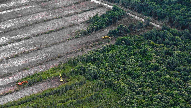 In Kalimantan, Indonesië, wordt een bos geruimd voor de aanleg van een palmolieplantage. Beeld afp