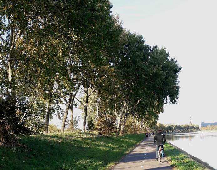 De bomen langs het Jaagpad in Middelburg zijn nog groen.