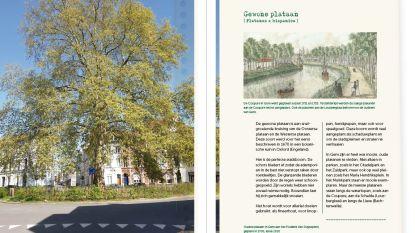 Vakantie in eigen stad? Ontdek fiets- en wandelroutes langs opmerkelijke Gentse bomen