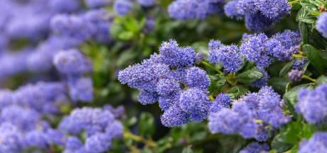 Klimaatopwarming in de tuin: kansen voor exotische planten