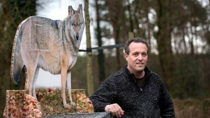 """Zondag eerste gegidste wandeling in leefgebied van Naya: """"Maar wie wolvin hoopt te zien, zal bedrogen uitkomen"""""""