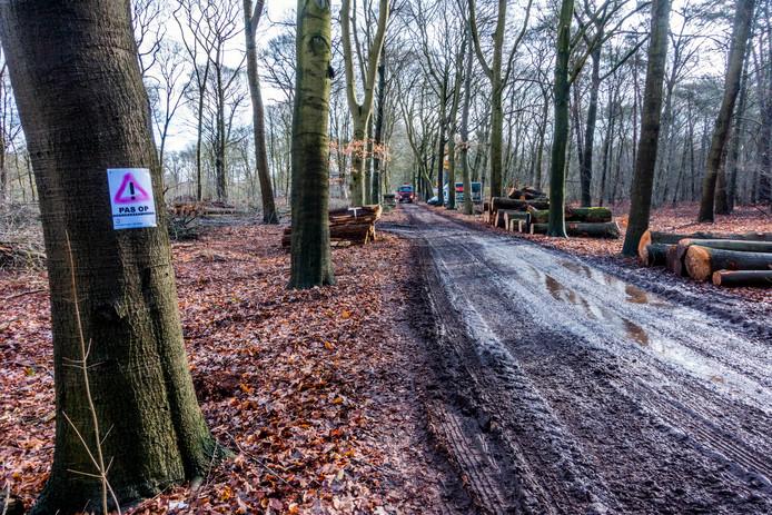 Omgezaagde Amerikaanse eiken liggen in het gelid nabij villa Vredelust op landgoed Heidepark.